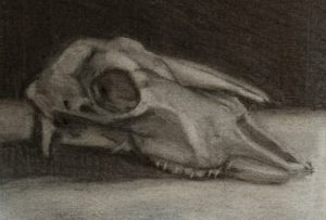 Goat skull charcoal drawing by Julie Dyer Holmes, fine artist, Raleigh NC 2017